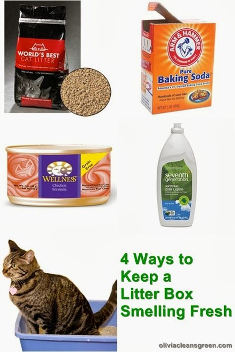 Olivia Lane, Health Coach: 4 Ways to Keep a Litter Box Smelling Fresh