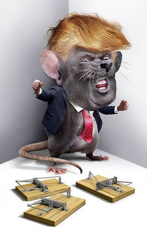 Image result for trump rat cartoon