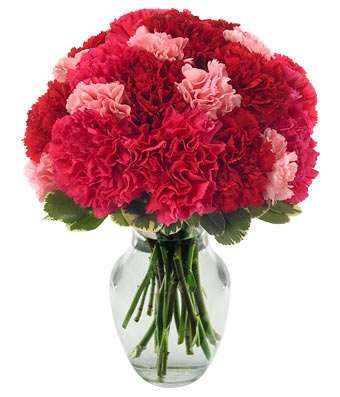 Clare Florist Hot Pink Carnations Bouquet Fresh Pink Carnation Flowers for All Occasions