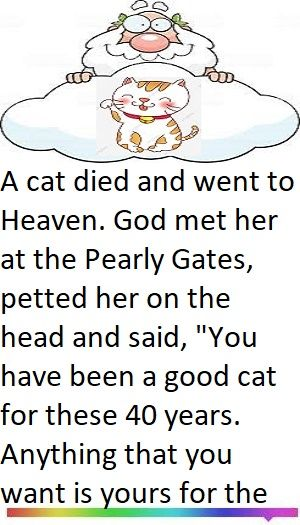 God And Cat Joke Clean Funny Jokes Quirky Quotes Jokes
