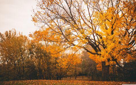 Autumn Scenery ? 4K HD Desktop Wallpaper for 4K Ultra HD TV