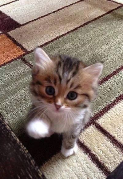 Awww He S So Small And So Cute Kittens Cutest Cute Cats