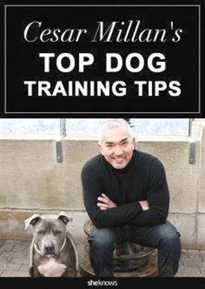 Dog Training Collar Metal Dog Training Up Dog Training 85383