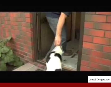 How To Train Your Older Dog To Go To The Bathroom Outside And Pics Of Teaching Your Dog To Get You A Be Training Your Dog Dog Training Obedience Puppy Training