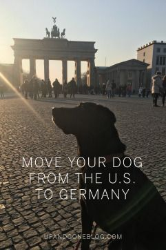 How To Move Your Dog Abroad Moving To Germany Moving Overseas Overseas Travel