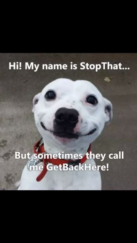 Top 23 Funny memes animals about Dogs – Quotations and Quotes
