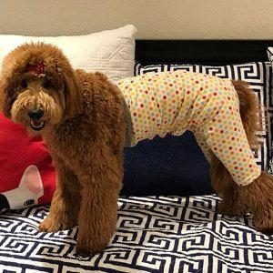 Walking Dog Pants Dog Wounds Dog Surgery Dog Cone Keep Clean