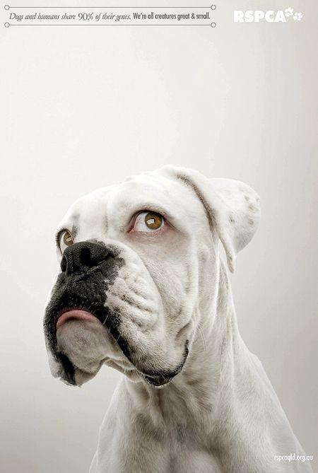 Dog With Human Eyes Perdigueiro Fotos Show