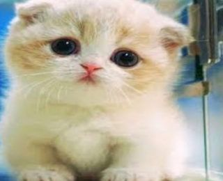 Female Cat Names That Start With The Letter J Cat Names Cats