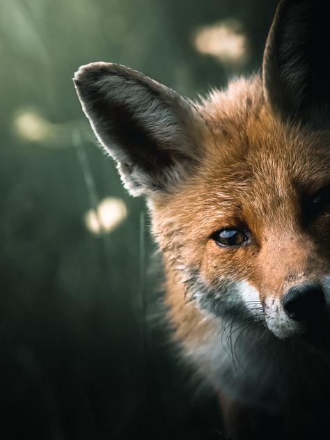 Alexis Rateau, l'art de sublimer la faune en photo | Graine de Photographe - The Blog
