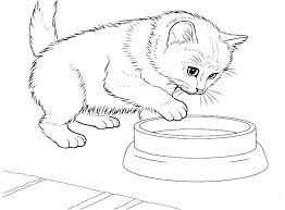 Coloring Pages Of Baby Kittens Cat Colors Animal Coloring Pages