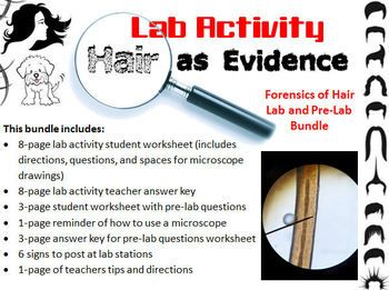 Forensic Science Hair Evidence Analysis Lab Activity And Pre Lab Worksheet Lab Activities Forensics Forensic Science