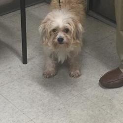 Shreveport Louisiana Pomeranian Meet Jackson A For Adoption Https Www Adoptapet Com Pet 26847889 Shreveport Louisiana Pomeran Animals Caddo Parish Pets