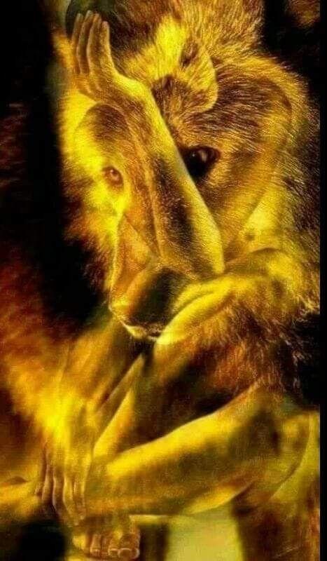 Pin By Alejandromelgar On Bonito Wolf Art Fantasy Wolf Wolf Spirit Animal