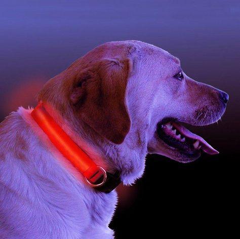 LED Light Up Dog Collar - Size XL - Orange
