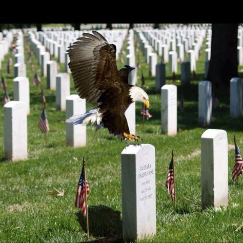 THE EAGLE HAS LANDED RESPECTING THE DECEASED❤