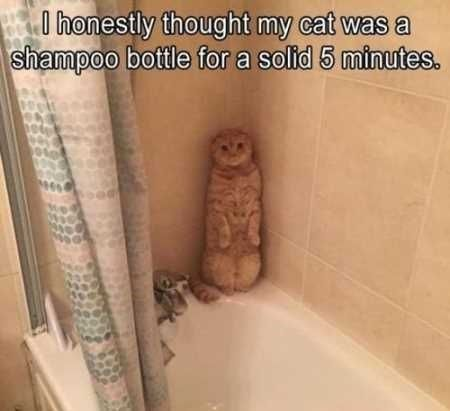 15 Hilarious Memes About The Never Ending Story Of Cats And Baths Funny Cat Memes Funny Animal Memes Funny Animal Jokes