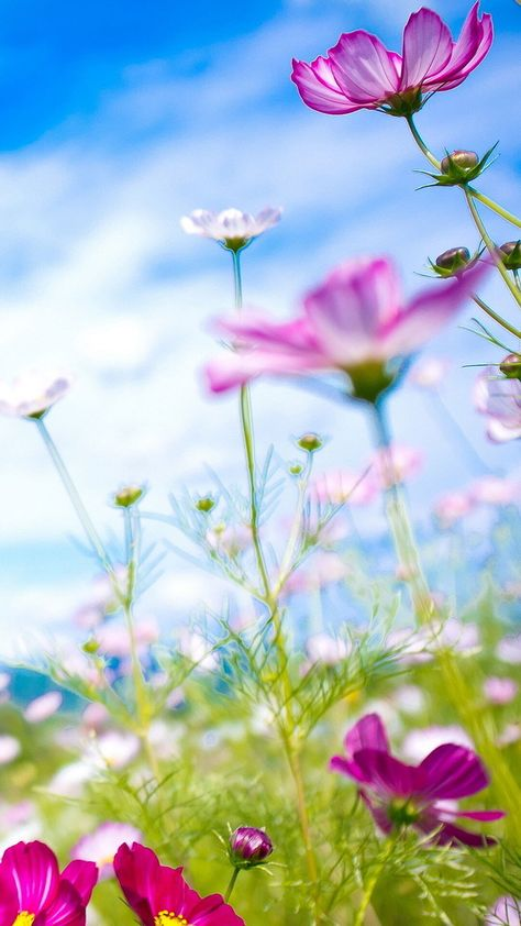 Spring Flowers Iphone 6 Wallpaper Tumblr Hd Spring Flowers