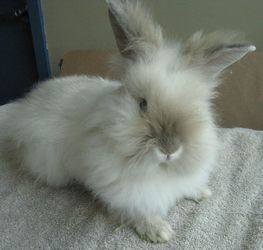 Adopt Leno On Rabbit Pictures Rabbit Little Bunny Foo Foo