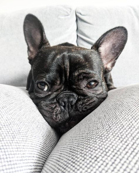 How many pictures do you need human?   ===>Follow us For More Updates!! Bouuuuu! Oscar est prêt pour la fête et vous?  . #halloween #hautecouture #halloweencostume #dogsofinstagram #fu... What's the best way to spend a very wet & windy Halloween? Napping of course #DogNap #toowettogooutside #LazyHalloween... Lets all hide from this snow that seems to be falling     #maplethevizsla #vizsla #vizslasofinstagram #vizslagram...    #dogs_of_world #dogmodel #cutevideos #puppypower #dogofig #dogspuppy #