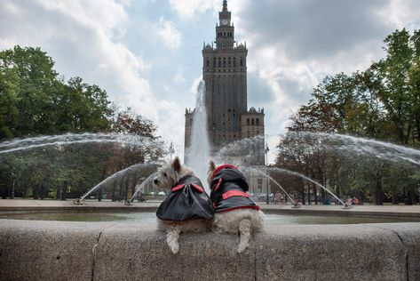 Who let da mice out ??    ❤Order our collections on www.bestdograincoats.com❤ #westie #westies #sunset #forest #frenchbulldog #frenchie #threedogs #foresttale #customdogclothes #customwestieclothes #tartandogcoat #plaidwestiecoat #plaidcoat #tartancoat #westieinplaid #petfriendlyplaces #dreaming #petfriendly #westies  #kaunastic #visitkaunas #travelwithdog   Photo credit @kuban_girl