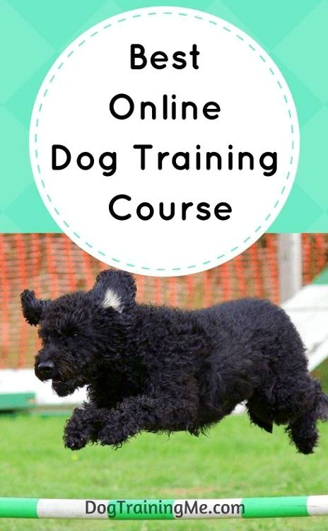 Dog Training Tips Make Sure To Stay Consistent With All The