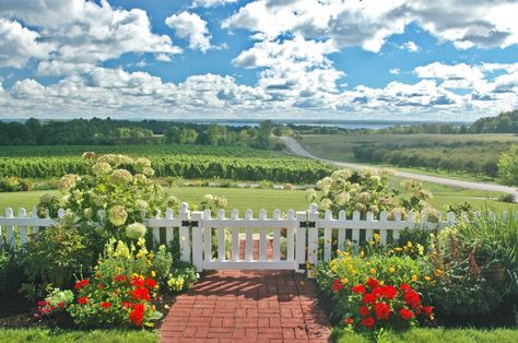 Late Summer Scene At The Brys Estate Winery On Old Mission Now Doesn T That Look Relaxing In 2020 Traverse City Michigan Vacations Summer Scenes