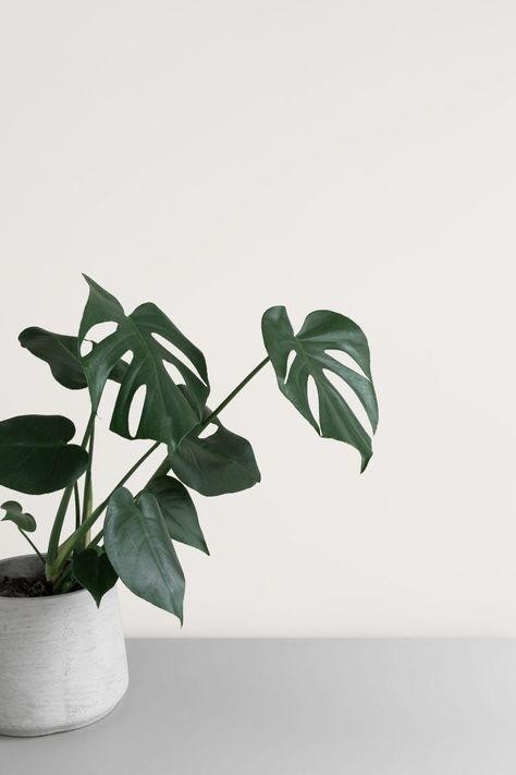 Elevated minimalist botanical stock photo by Moyo Studio — minimalist design, simplicity, minimal Plant Aesthetic, Simple Aesthetic, Aesthetic Collage, White Aesthetic, Aesthetic Painting, Aesthetic Design, Aesthetic Photo, Minimalist Lifestyle, Minimalist Living