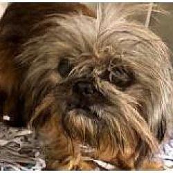 Pet Card Pets Animal Rescue Pet Adoption