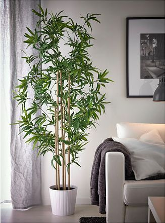 Bamboo Plant Decoration In Living Room Leadersrooms
