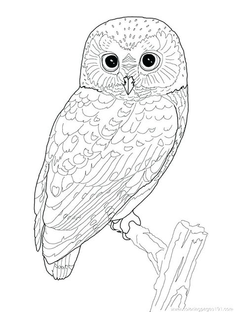 free coloring pages of owls free coloring pages of owls