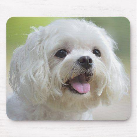 White Maltese Dog Mouse Pad Zazzle Com Maltese Dogs Maltese