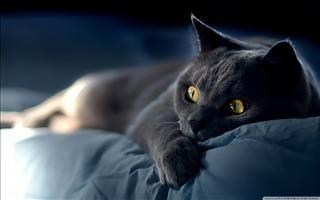 Fonds D Ecran Gratuits Sur Pc Astuces Petit Felin Chats Et Chatons Comme Chien Et Chat