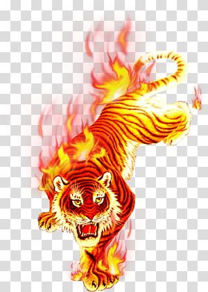 Brown And Yellow Tiger Illustration T Shirt Fire Flame Charcoal Flame Tiger Festival Transparent Tiger Illustration Transparent Background Cloud Illustration
