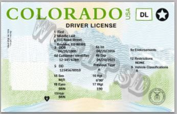 photo relating to Printable Fake Ids named Colorado Motorists License Get Registered Genuine/Untrue Pports