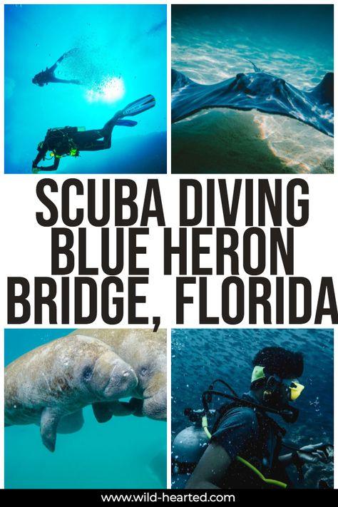 Blue Heron Bridge Scuba Diving