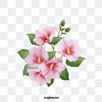 Hibiscus Flower Png Images 2020 이미지 포함 꽃 그래픽 디자인