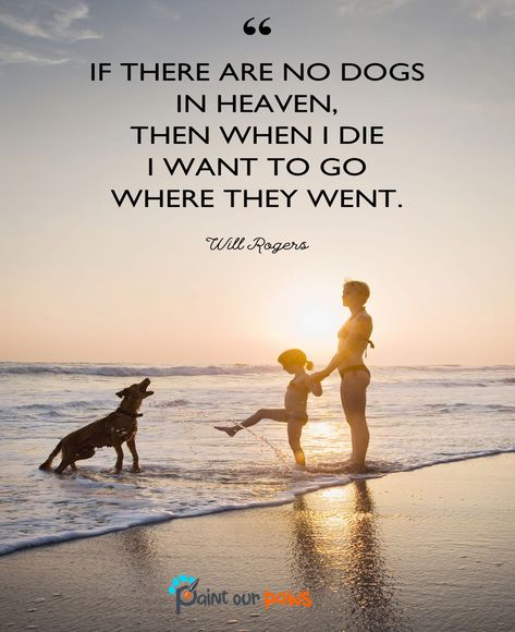 If there are no dogs in heaven, then when I die I want to go where they went. 🐶❤️️ #dogsvideos #dogbestpix #cutedogvideos #doglifestyle #dogday #puppylove #beautifuldog #funnydogvideos #lovelydog #crazydog #dogvideosofinstagram #puppy #doggy #puppies #dogfunnyvideos #dogscorner #dogphotography #dogofinstagram #dogmom #dogsofinstgram #dogmodel #dogwalk #dogood #doge #dogtraining #doggies #dogwalking #dogsandpals