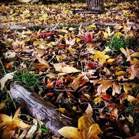 foglie #leaf #leafs #leaves #leaflet...