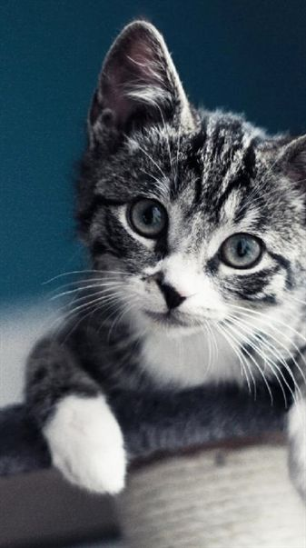 Cute Kitten Picture Of Super Black And White Shot Cat Cute Cats Silly Cats Pictures Cute Cats And Kittens