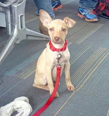 Pictures Of Sabana Maria A Labrador Retriever For Adoption In Dallas Ga Who Needs A Loving Home Dog Adoption Kitten Adoption Labrador Retriever
