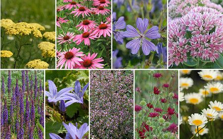 Staudenbeet Gute Laune Am Terrassenrand Zum Nachpflanzen 12 Pflanzen Im Mein Schoner Garten Shop Garten Gartenshop
