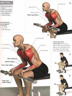 Ejercicio Antebrazo Ejercicios Para Antebrazo Ejercicios Musculacion Entrenamiento De Brazo