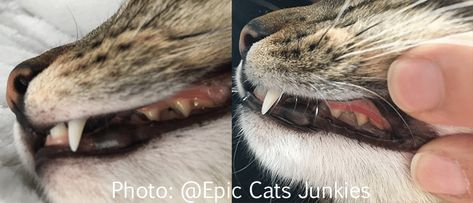 Epingle Sur Blogue Epic Cats Junkies