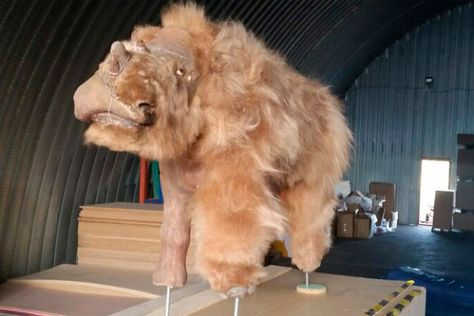 Extinct Woolly Rhino Reconstructed From Mummified Remains