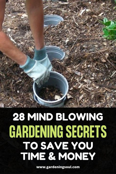 28 Mind Blowing Gardening Secrets To Save You Time  Money
