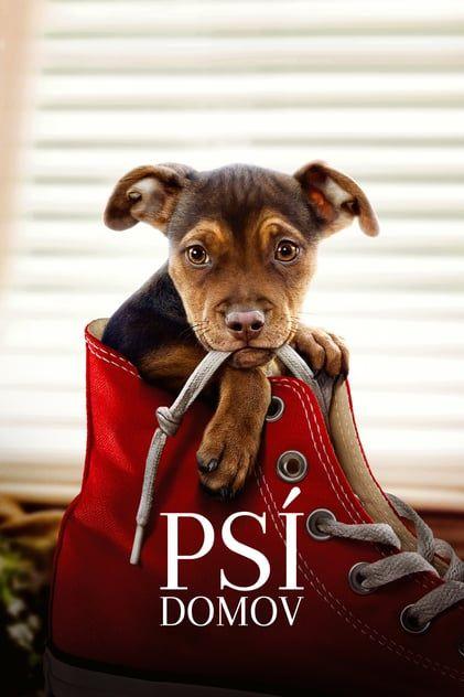 Descargar)))~A Dog's Way Home [2019] Pelicula Online Completa