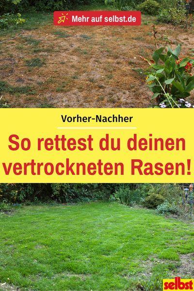 Rasen Verbrannt Selbst De Rasen Gartengraser Rasenpflege