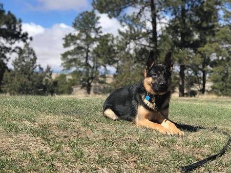 Dog Training Parker Colorado 719 286 9347 Dog Obedience Dog