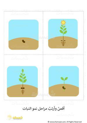 ماذا يحتاج النبات لينمو اوراق عمل علوم مراحل نمو النبتة6 Clip Art Kindergarten Art